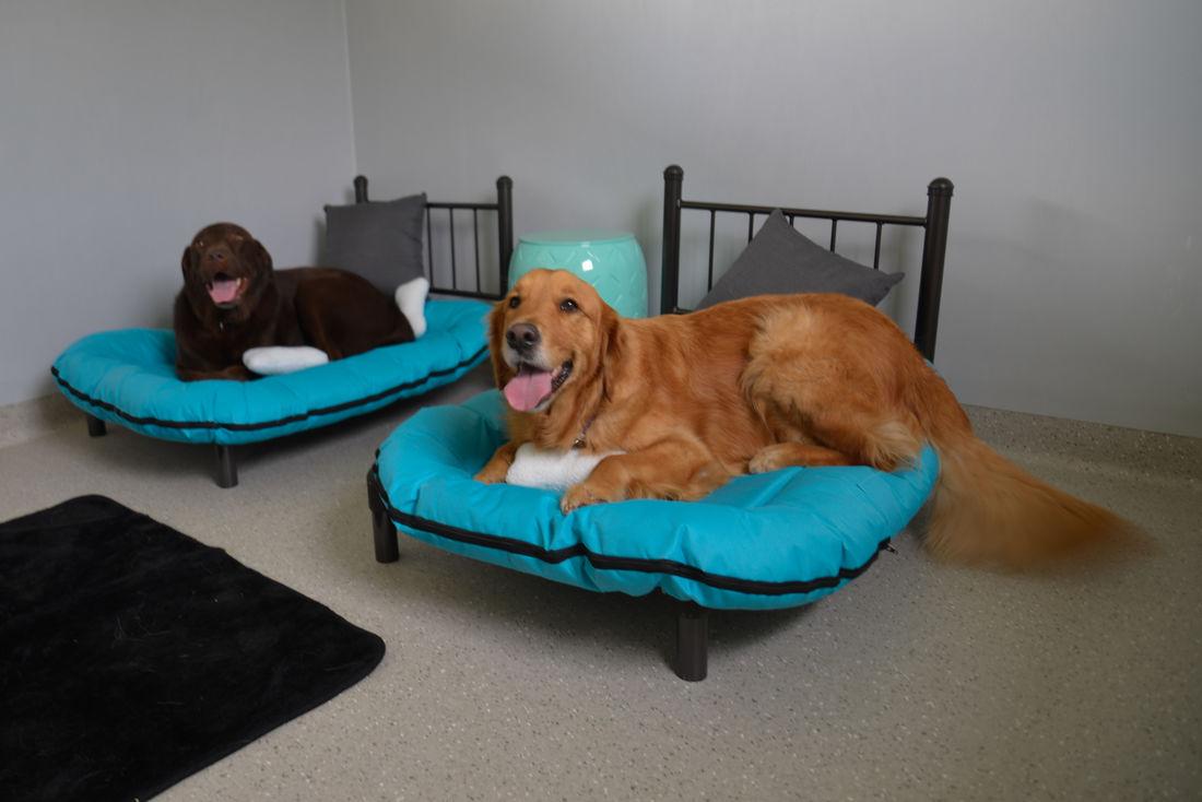 Maraboon Pet Resort QLD   Veterinary Clinic, Boarding ...